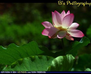 20110611 - Shing Mun Valley Park
