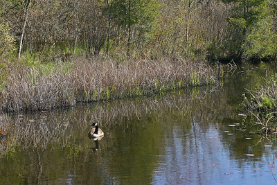 Cranberry Bog County Park, Riverhead