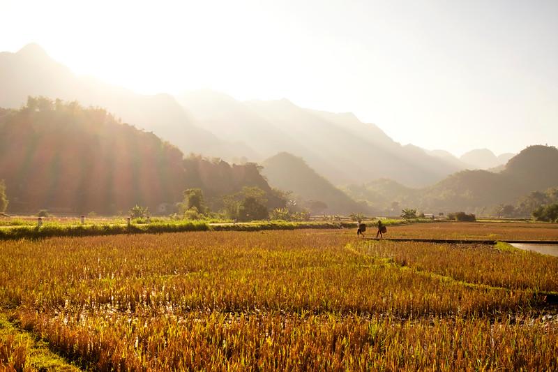 RiceFieldWorkers_MaiChau_1_blog_bright.jpg