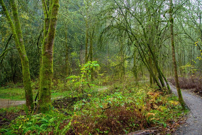 Portland Trail #2