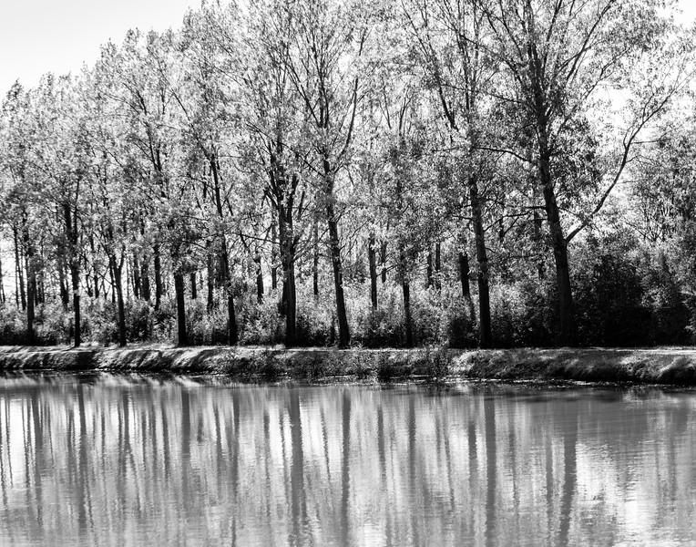 Canal trees_BW_2L8A2400_BW.jpg