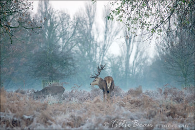 Winter in Bushy Park, London