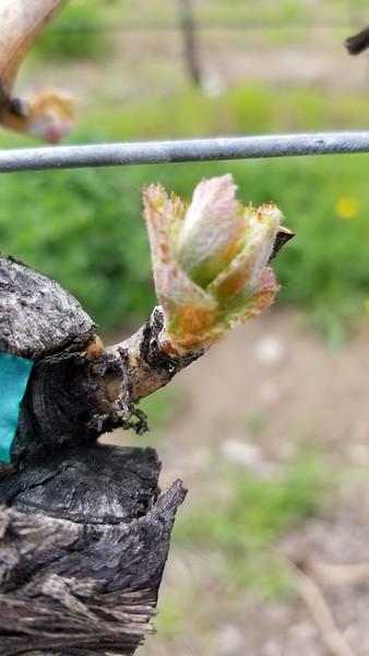BC Wine Seasons