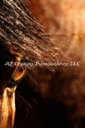 """Essence of Equus"" took first place in the Details division of the 2012-Ideal Equine competition."
