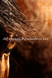 """""""Essence of Equus"""" took first place in the Details division of the 2012-Ideal Equine competition."""