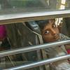 20  Eyes of Bombay