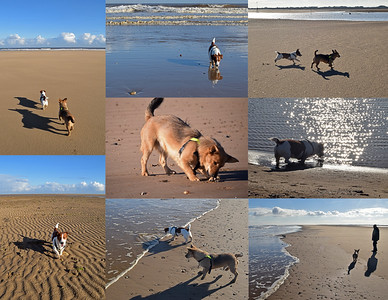 THE DOGS AT SALTFLEET HAVEN