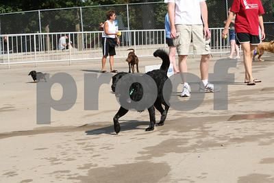 Dog Paddle IC 090909