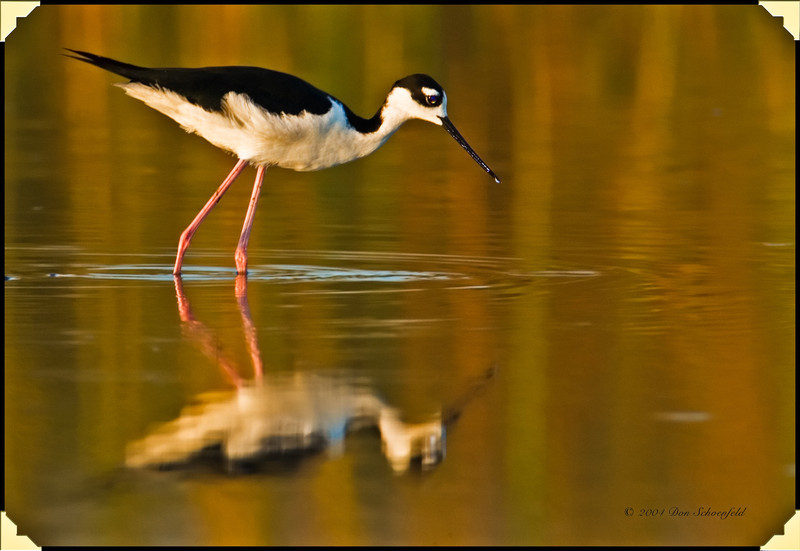 Other Wading Birds