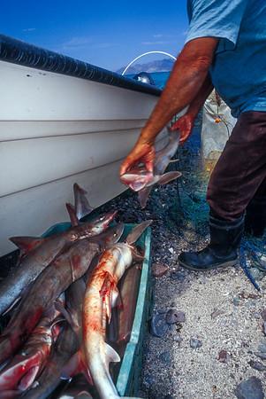 Fisherman of El Pardito