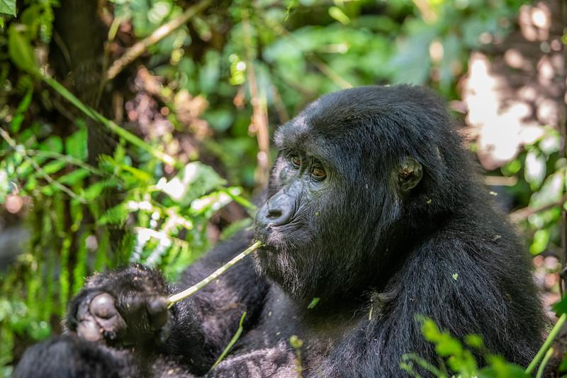 Uganda_T_Gor-147.jpg