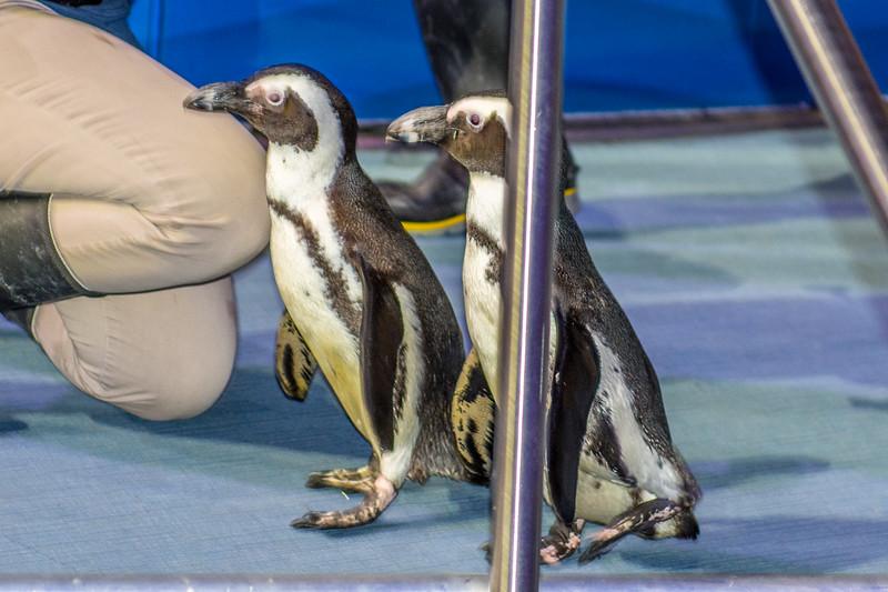 GA Aquarium with Linc, Ali & Abe-49.jpg