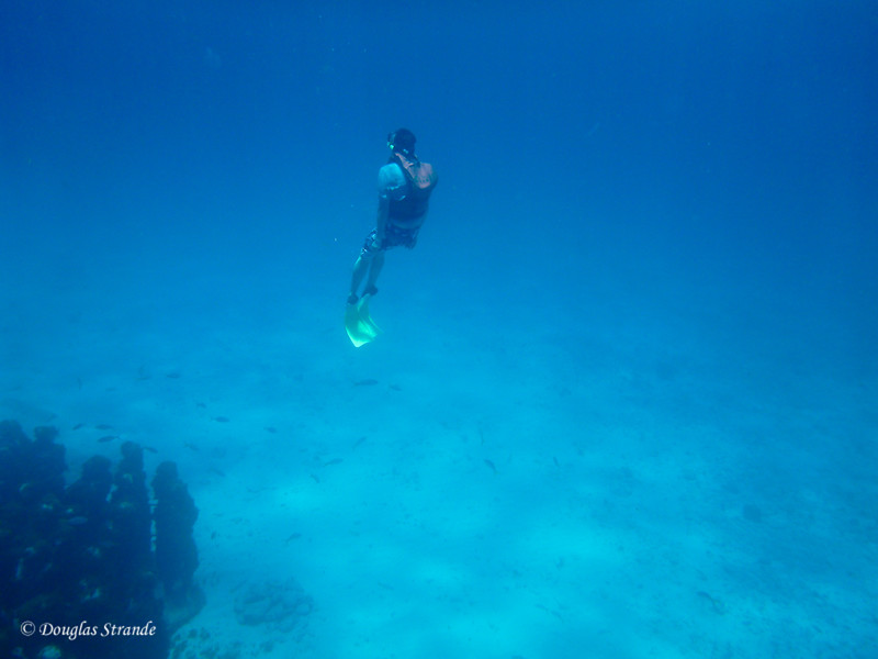 Michael returning to the surface, after diving down with his life vest on!