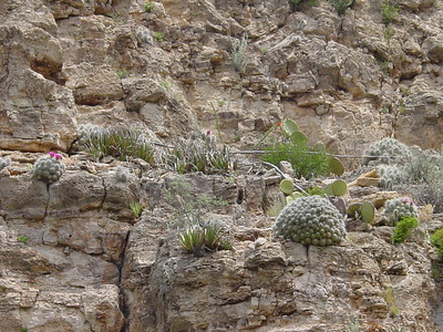 Guadalupe Mountains NP 2005