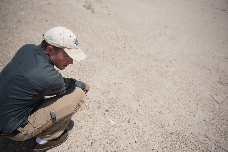 David Newstead comes back to a site where a tern nest was, only to find the nest missing.