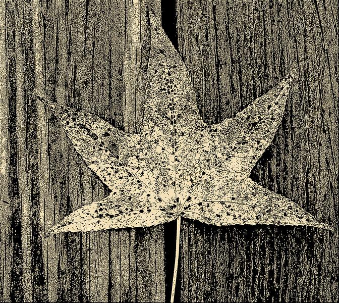 2012-07-09 Leaf on Walk Hickory Hollow DSC1302 background_FotoSketcher.jpg