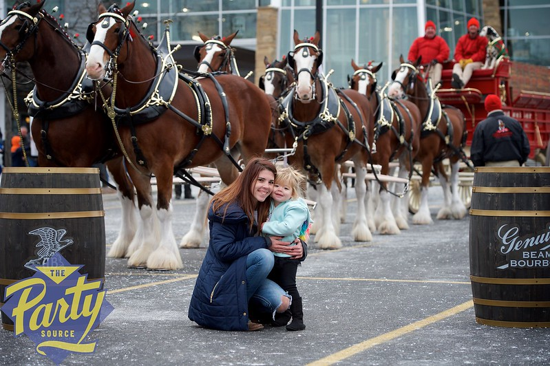Clydesdale Portraits 40.jpg