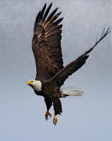 Topaz Trials for 2010 Baytown Eagles
