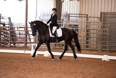 Horse 122