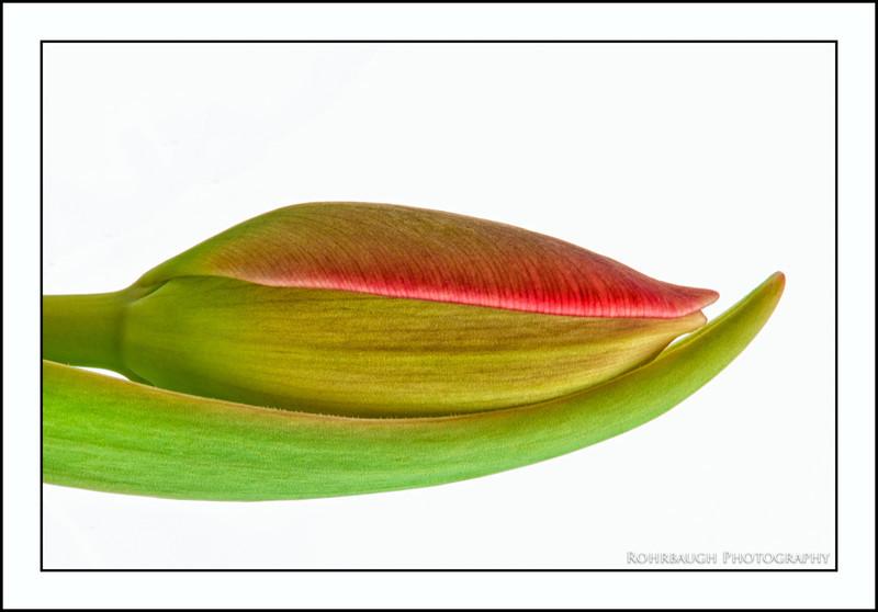 Rohrbaugh Photography Flowers 33.jpg