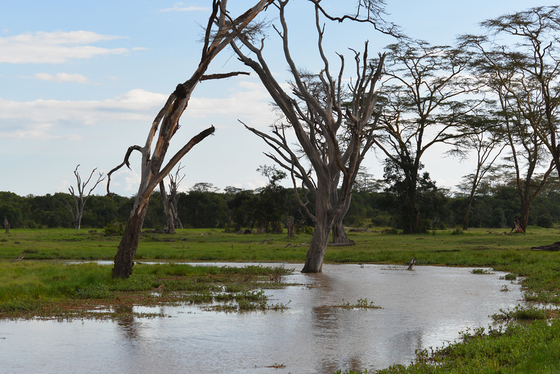 East Africa Safari 23.jpg