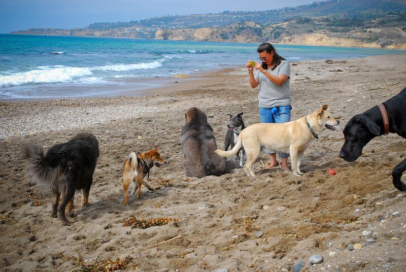 dogs_beach-045.jpg