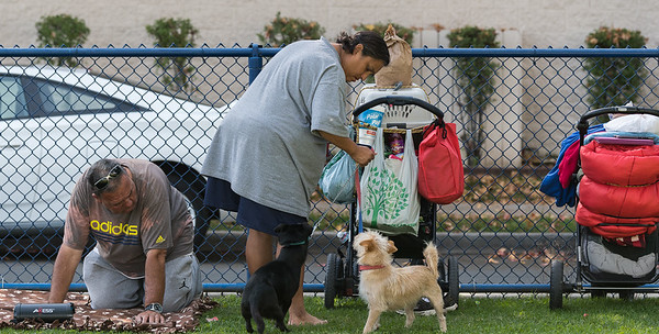 HOMELESS PETS & DOGS
