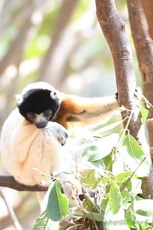 Madagascar 2017 (27)