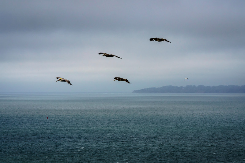 Pelicans in Formation (1 of 1).jpg
