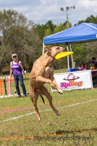 _MG_2961Up_dog_International_2016_StephaniellenPhotography.jpg