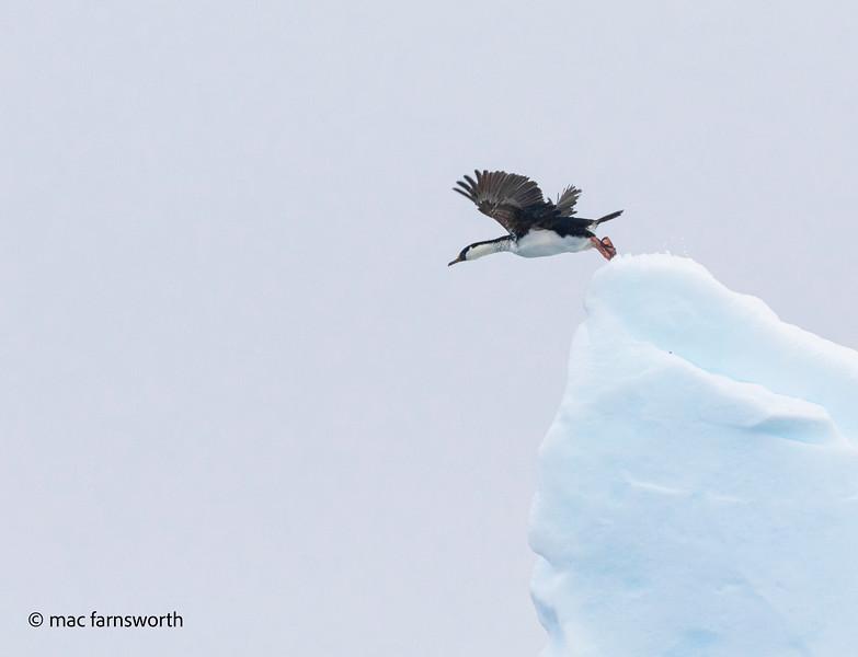 antartica-16-2.jpg