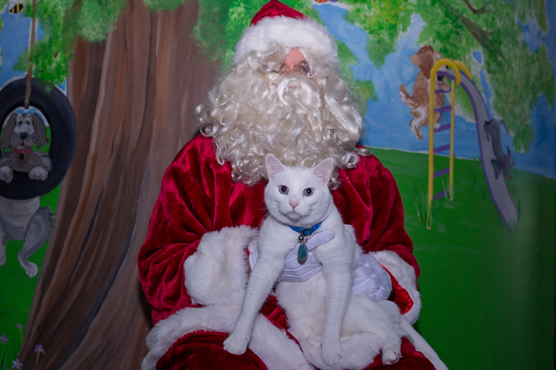 Pet Pictures With Santa-6.jpg