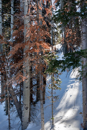 COOL IMAGES ON THE SLOPES