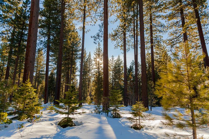 Lake Tahoe-0392.jpg