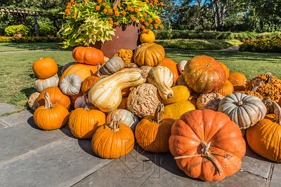 Large cluster of pumpkins and gourds