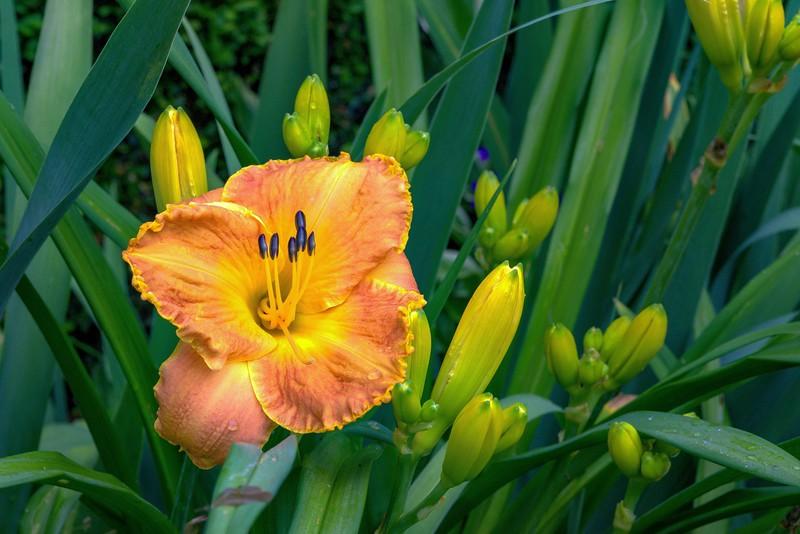 Garden 1, 158.jpg