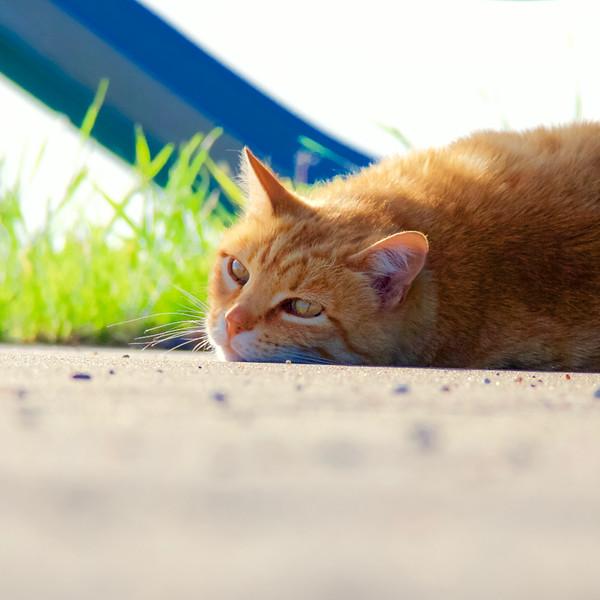 2016 Summer cat - 1.jpg