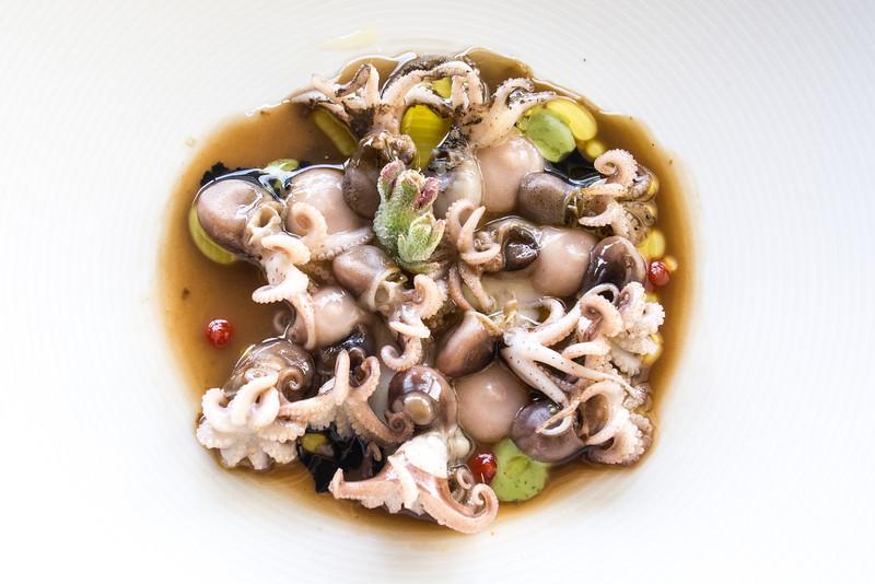 Miramar baby octopus 2.jpg