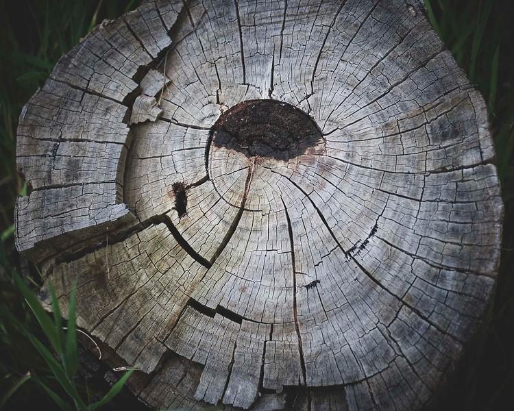 stump 20200924 172 .jpg