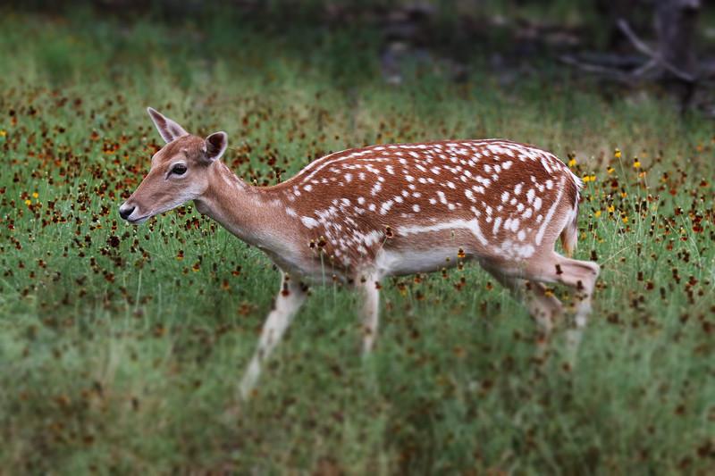 Wildlife Ranch-0621.jpg
