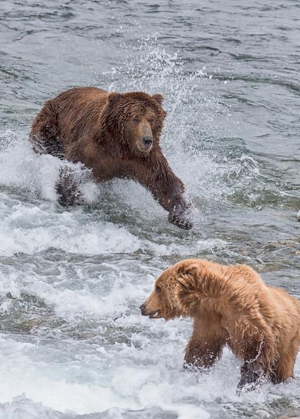 Alaska_2013_FH0T4917 (1).jpg