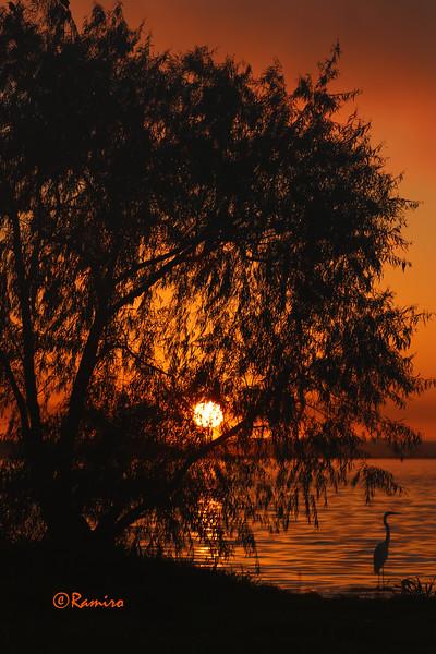 Sunrise Braunig Lake IMG_0640.jpg
