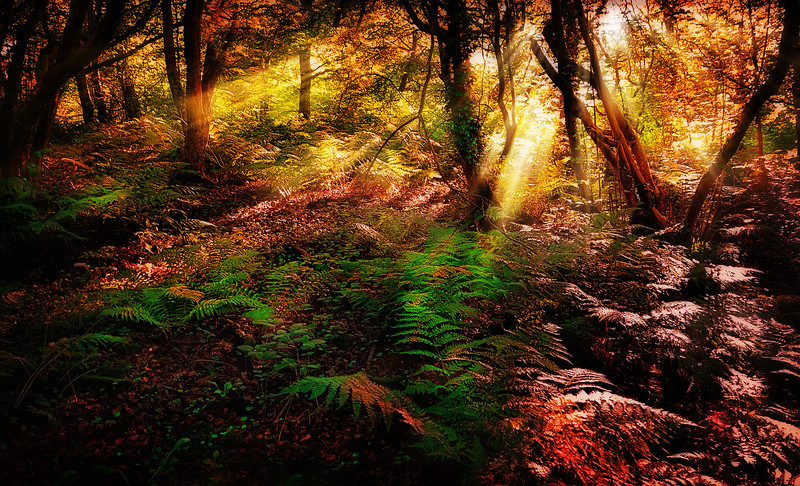The Magic of Light-002.jpg