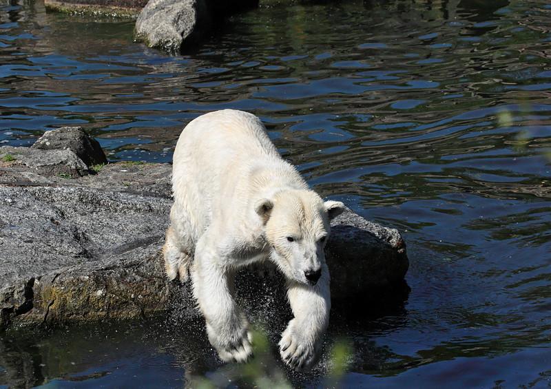1D3L7383 zoo.jpg