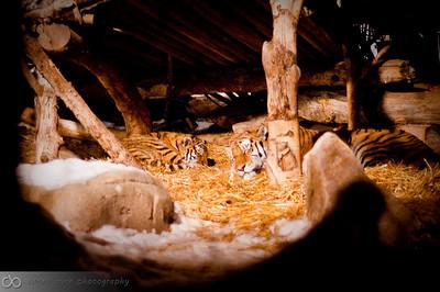 Zoo Lights - December 2009