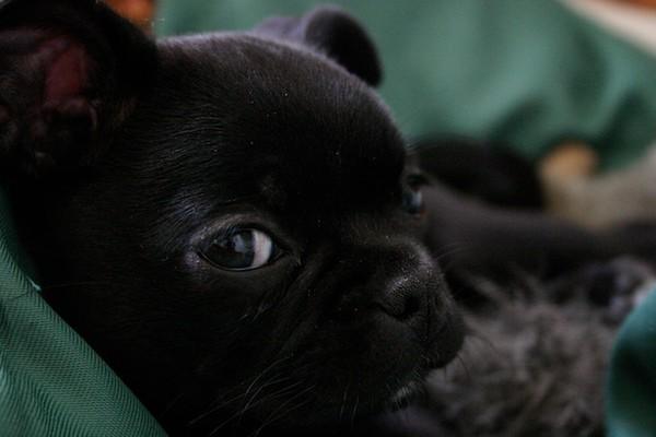 Arlo + Puppy Stella