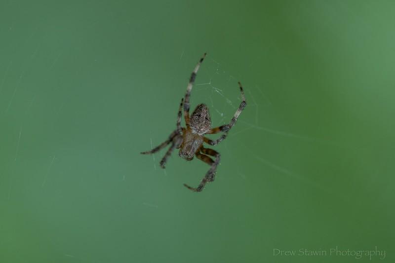 2019.07.13 spider_24.jpg