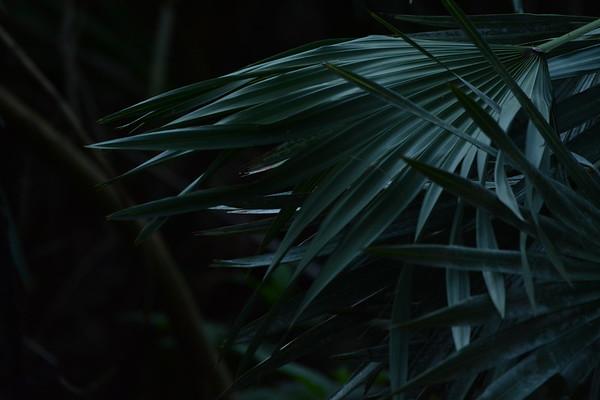 2019-02-04 Green Cay