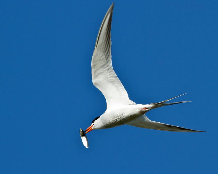 bird  10126.jpg