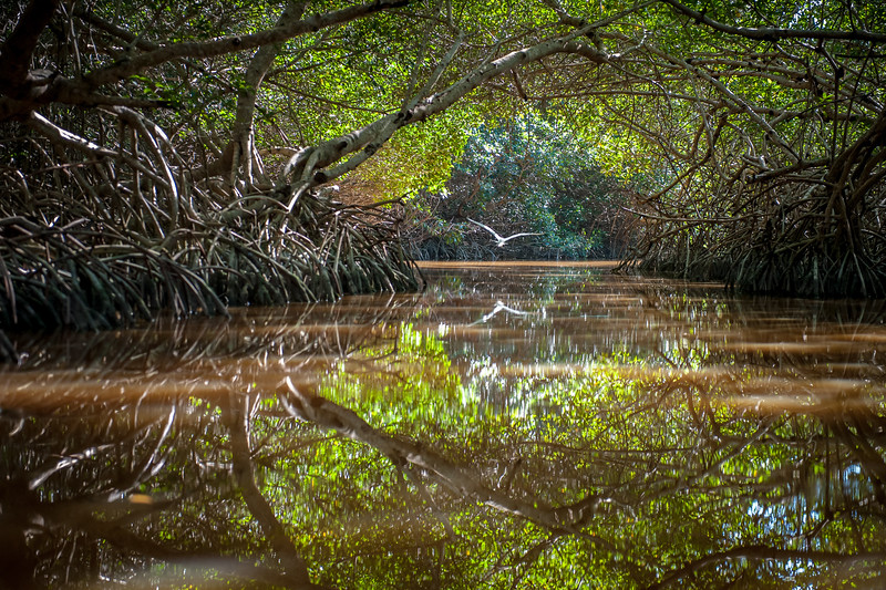 29 - Yucatan - February '14.jpg